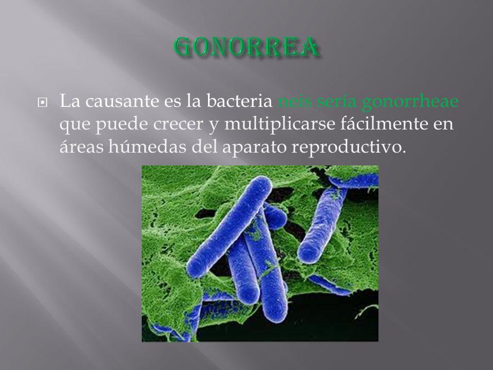  La causante es la bacteria neis sería gonorrheae que puede crecer y multiplicarse fácilmente en áreas húmedas del aparato reproductivo.