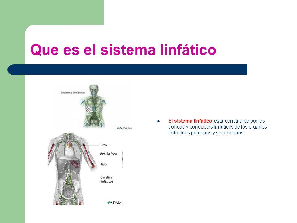 Introducción El sistema linfático desde el punto de vista funcional ...