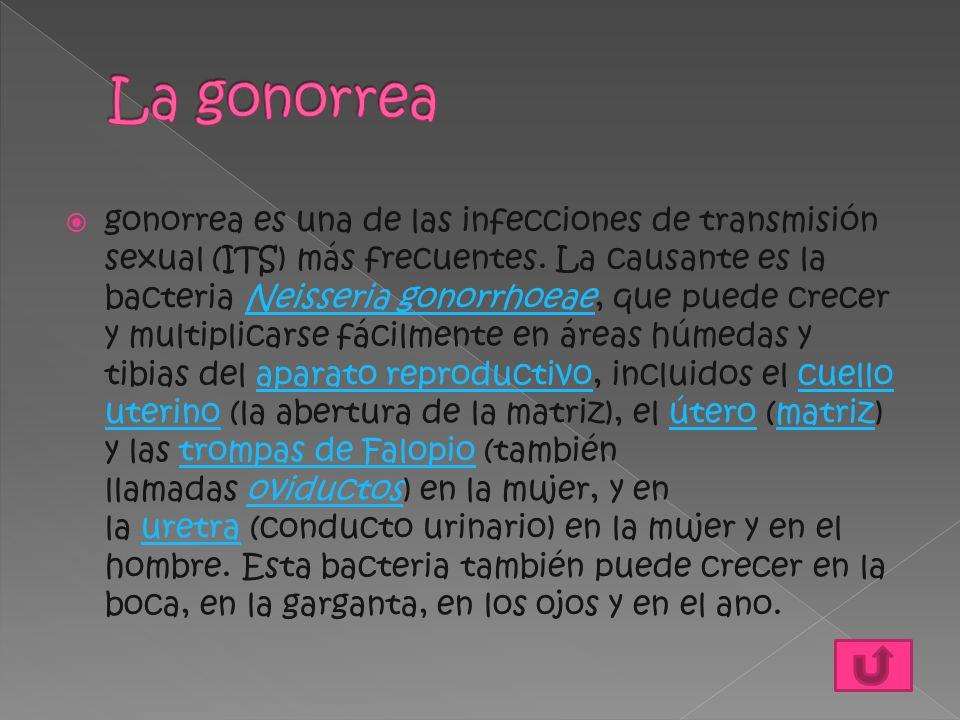  gonorrea es una de las infecciones de transmisión sexual (ITS) más frecuentes. La causante es la bacteria Neisseria gonorrhoeae, que puede crecer y