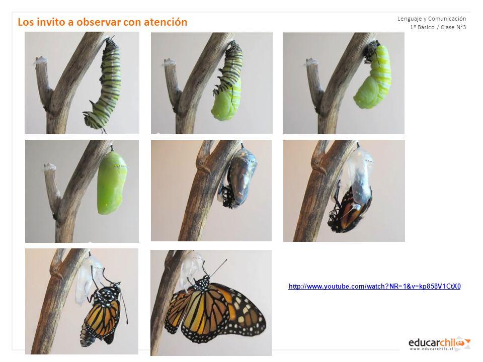 Lenguaje y Comunicación 1º Básico / Clase N°3 Los invito a observar con atención http://www.youtube.com/watch NR=1&v=kp858V1CtX0
