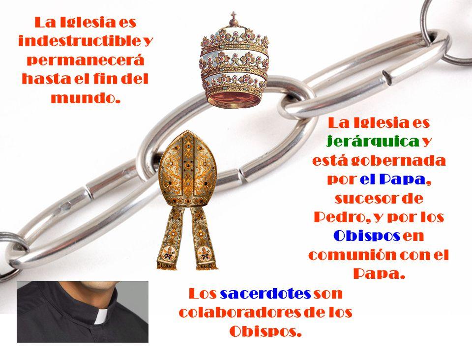Por Institución Divina, los Obispos suceden a los Apóstoles, en cadena ininterrumpida, como Pastores de la Iglesia.