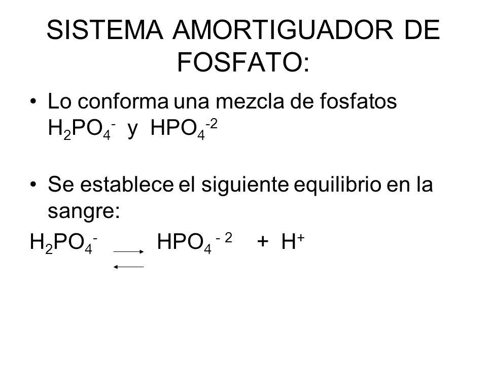 SISTEMA AMORTIGUADOR DE FOSFATO: Lo conforma una mezcla de fosfatos H 2 PO 4 - y HPO 4 -2 Se establece el siguiente equilibrio en la sangre: H 2 PO 4 - HPO 4 - 2 + H +
