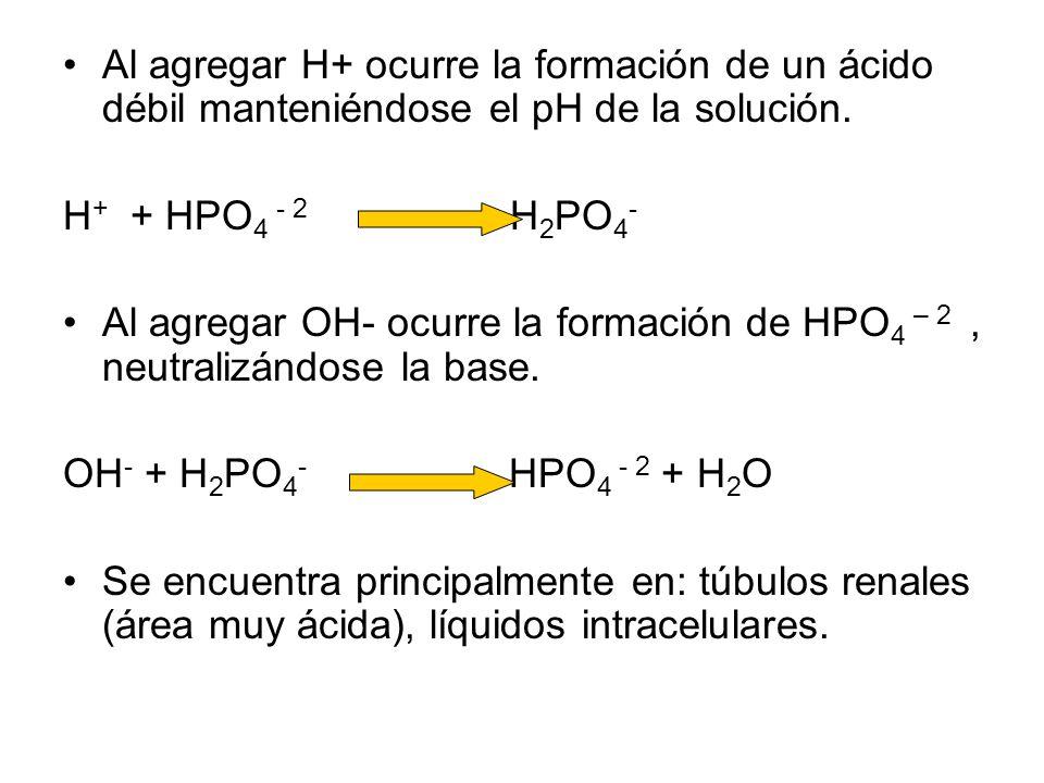 Al agregar H+ ocurre la formación de un ácido débil manteniéndose el pH de la solución.