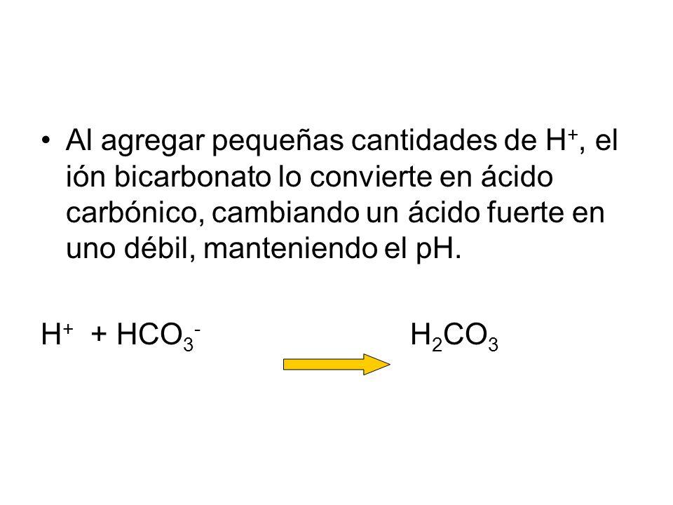 Al agregar pequeñas cantidades de H +, el ión bicarbonato lo convierte en ácido carbónico, cambiando un ácido fuerte en uno débil, manteniendo el pH.