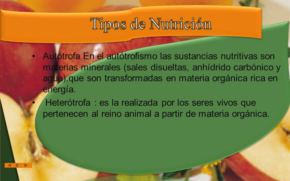 Autótrofa En el autótrofismo las sustancias nutritivas son materias minerales (sales disueltas, anhídrido carbónico y agua),que son transformadas en materia orgánica rica en energía.