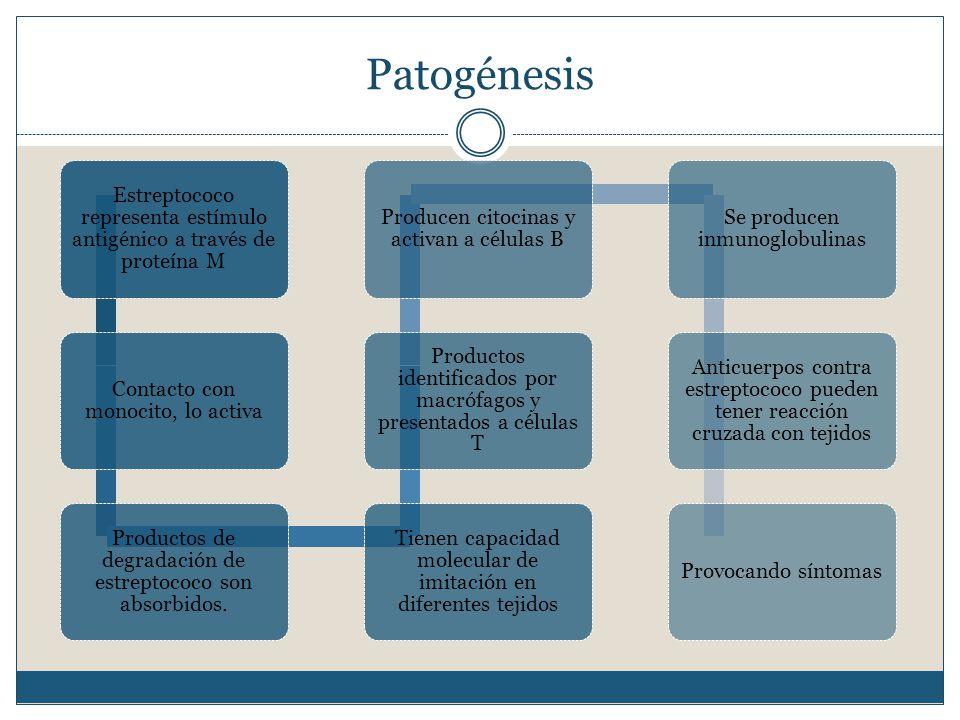 Patogénesis Estreptococo representa estímulo antigénico a través de proteína M Contacto con monocito, lo activa Productos de degradación de estreptococo son absorbidos.