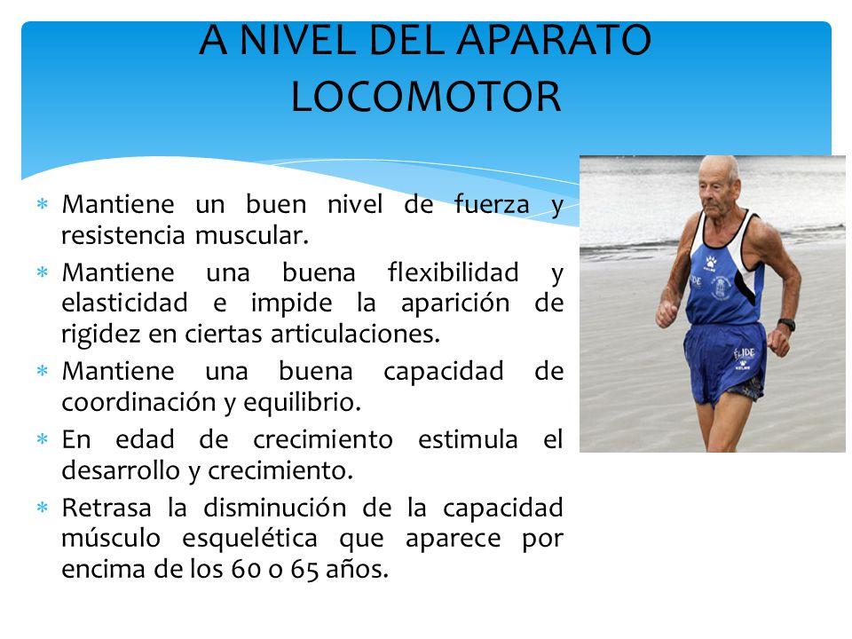 A NIVEL DEL APARATO LOCOMOTOR  Mantiene un buen nivel de fuerza y resistencia muscular.  Mantiene una buena flexibilidad y elasticidad e impide la a