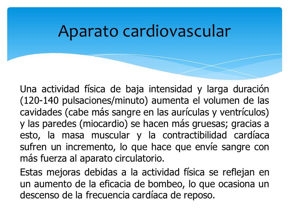 Una actividad física de baja intensidad y larga duración (120-140 pulsaciones/minuto) aumenta el volumen de las cavidades (cabe más sangre en las aurí