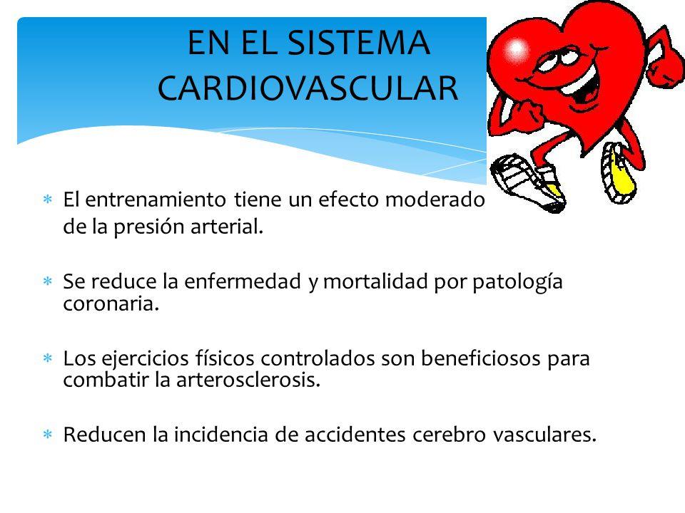 EN EL SISTEMA CARDIOVASCULAR  El entrenamiento tiene un efecto moderador de la presión arterial.  Se reduce la enfermedad y mortalidad por patología