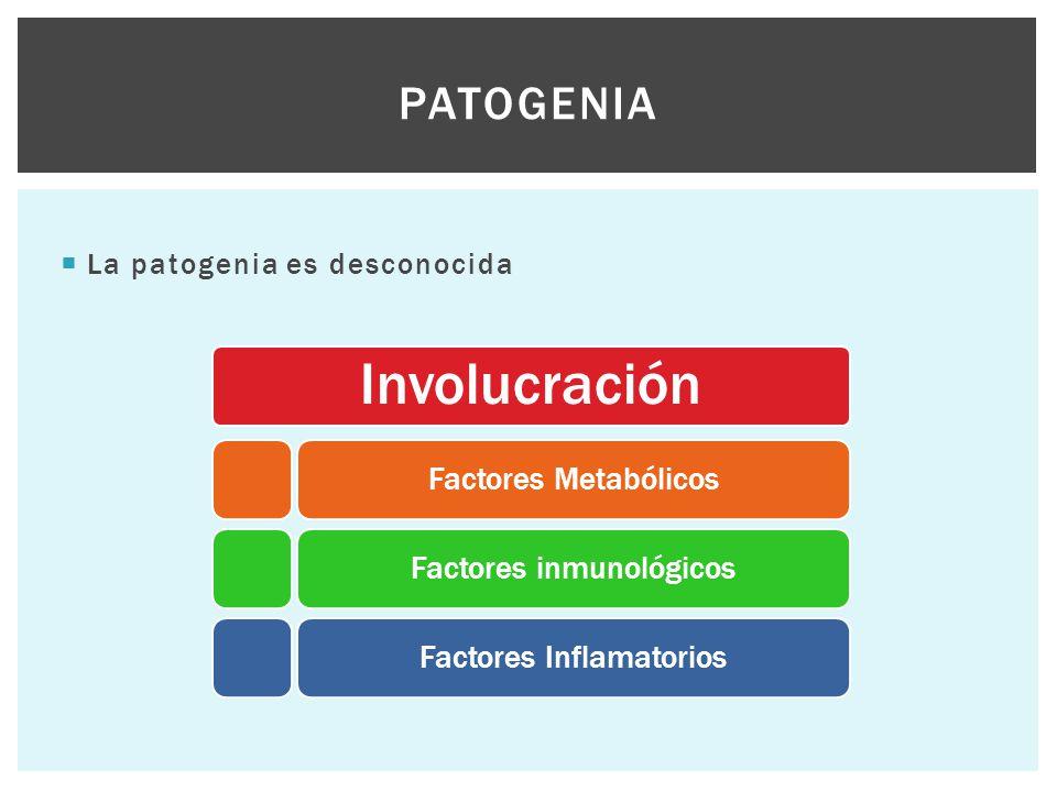  La patogenia es desconocida PATOGENIA Involucración Factores MetabólicosFactores inmunológicosFactores Inflamatorios