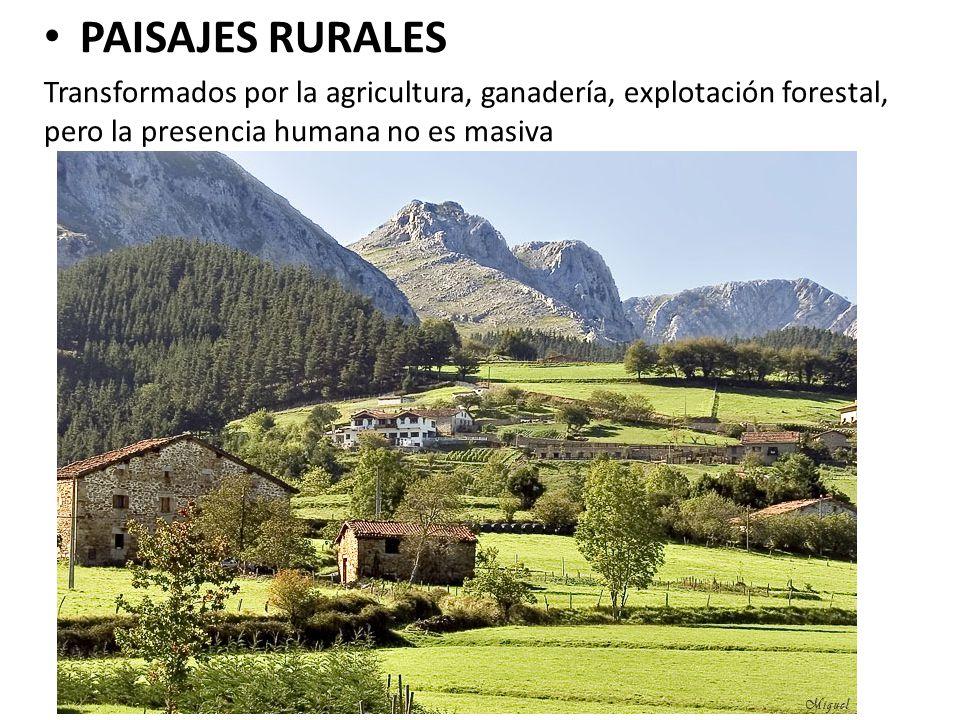 PAISAJES RURALES Transformados por la agricultura, ganadería, explotación forestal, pero la presencia humana no es masiva