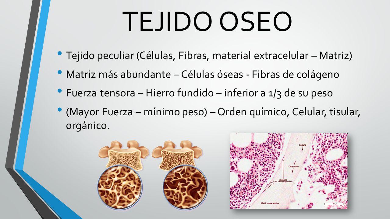 Contemporáneo Lo Que Es La Anatomía Matriz Ideas - Imágenes de ...