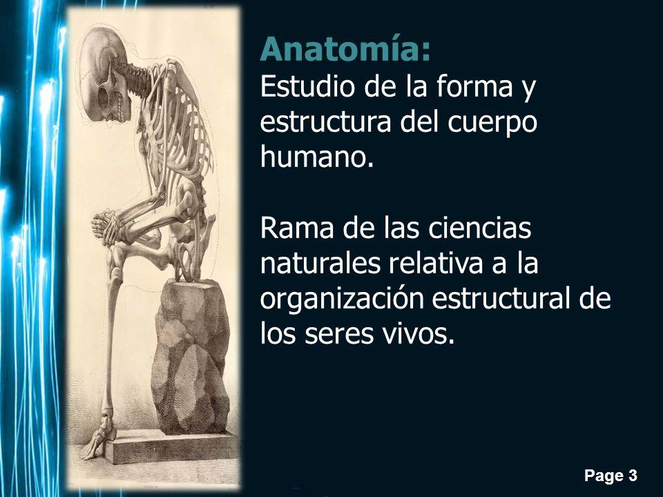 elemento estructural humano: