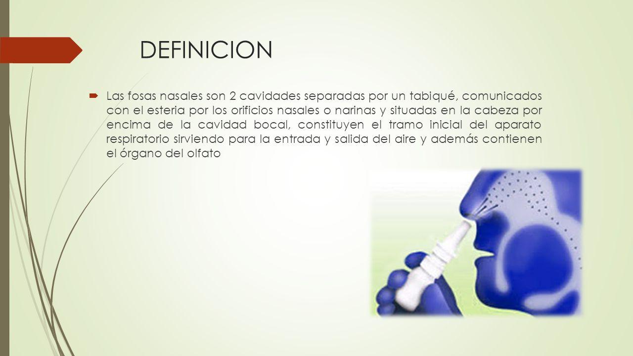 DEFINICION  Las fosas nasales son 2 cavidades separadas por un tabiqué, comunicados con el esteria por los orificios nasales o narinas y situadas en la cabeza por encima de la cavidad bocal, constituyen el tramo inicial del aparato respiratorio sirviendo para la entrada y salida del aire y además contienen el órgano del olfato