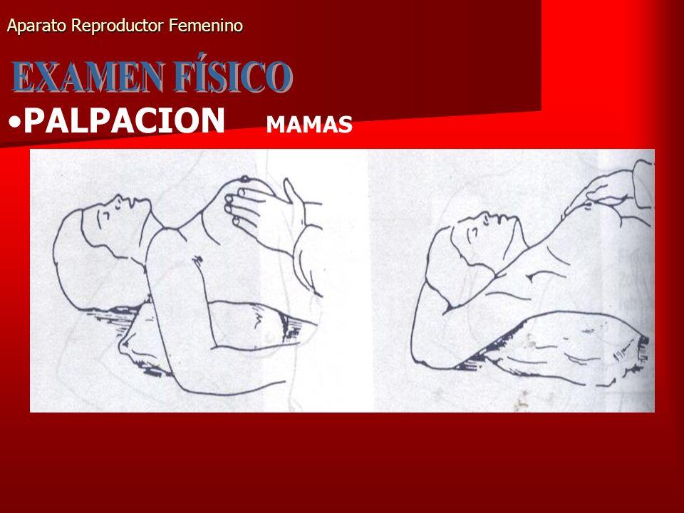 Aparato Reproductor Femenino PALPACION MAMAS