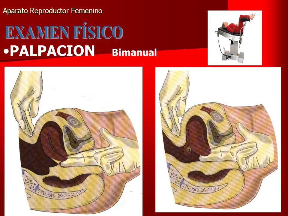 Aparato Reproductor Femenino PALPACION Bimanual