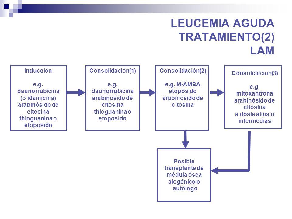 leucemia aguda tratamiento: