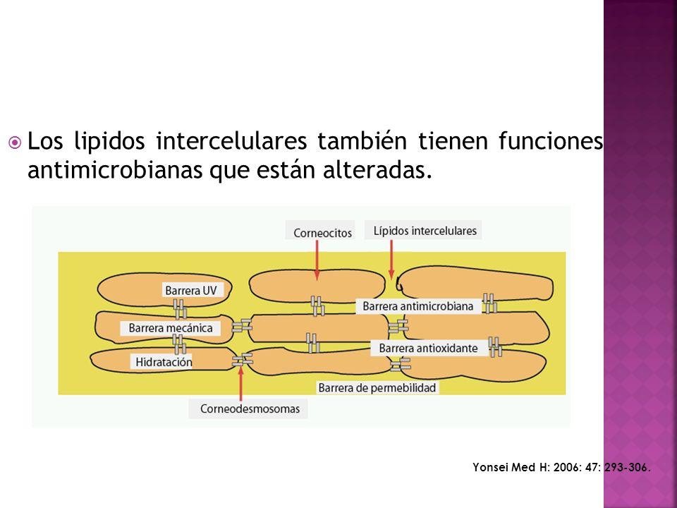  Los lipidos intercelulares también tienen funciones antimicrobianas que están alteradas.