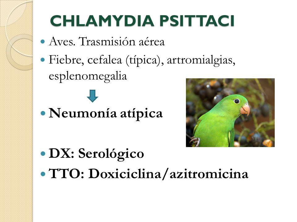 CHLAMYDIA PSITTACI Aves. Trasmisión aérea Fiebre, cefalea (típica), artromialgias, esplenomegalia Neumonía atípica DX: Serológico TTO: Doxiciclina/azi