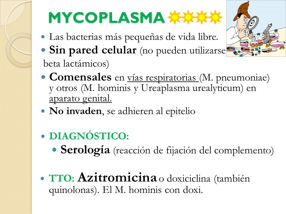 MYCOPLASMA Las bacterias más pequeñas de vida libre. Sin pared celular (no pueden utilizarse beta lactámicos) Comensales en vías respiratorias (M. pne