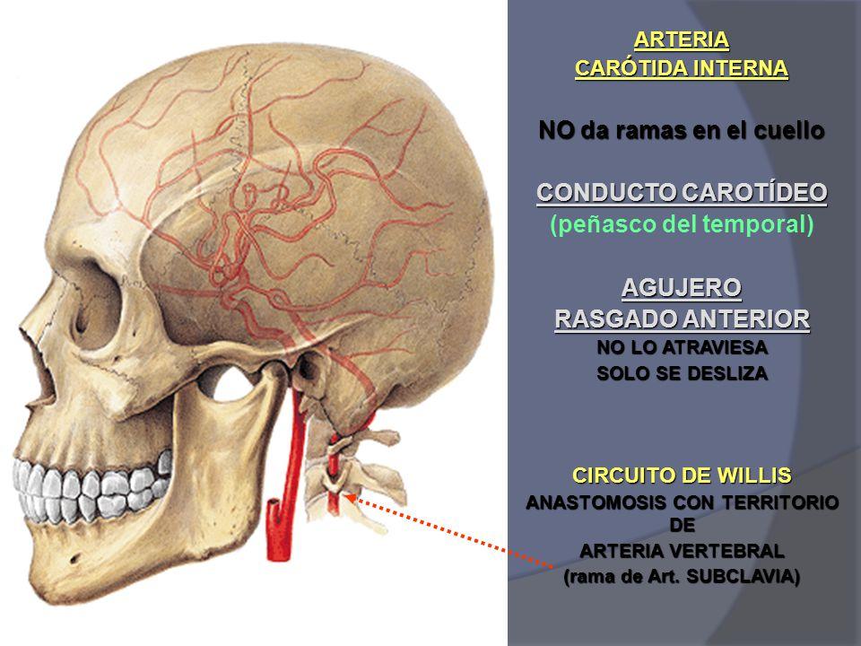 Famoso Conducto Carotídeo Ideas - Anatomía de Las Imágenesdel Cuerpo ...