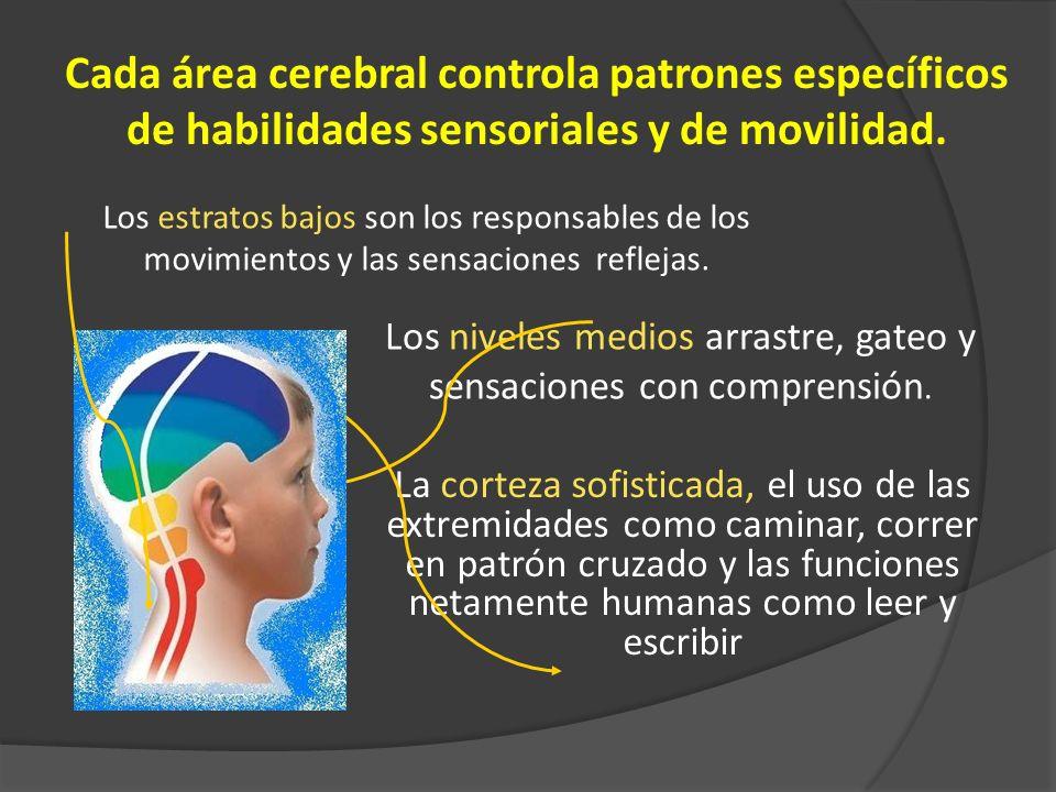 Resultado de imagen de Desarrollando habilidades sensoriales.