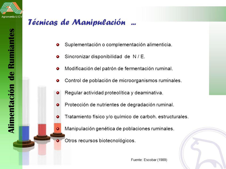 diapositiva rumiantes: