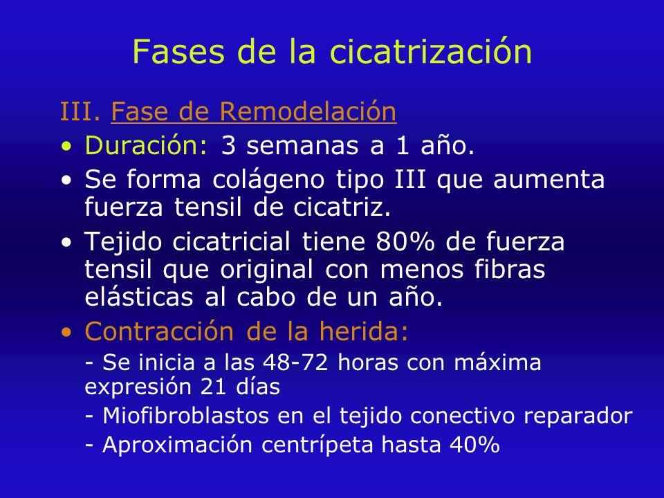 Fases de la cicatrización III.Fase de Remodelación Duración: 3 semanas a 1 año.
