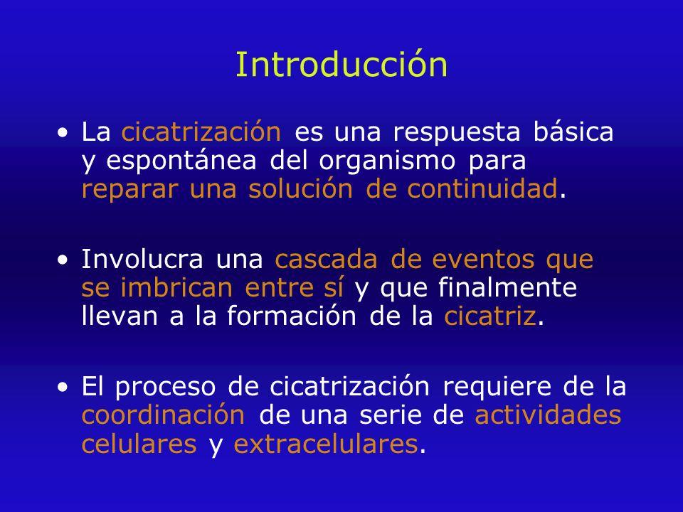 Introducción La cicatrización es una respuesta básica y espontánea del organismo para reparar una solución de continuidad.