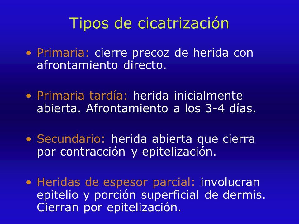 Tipos de cicatrización Primaria: cierre precoz de herida con afrontamiento directo.