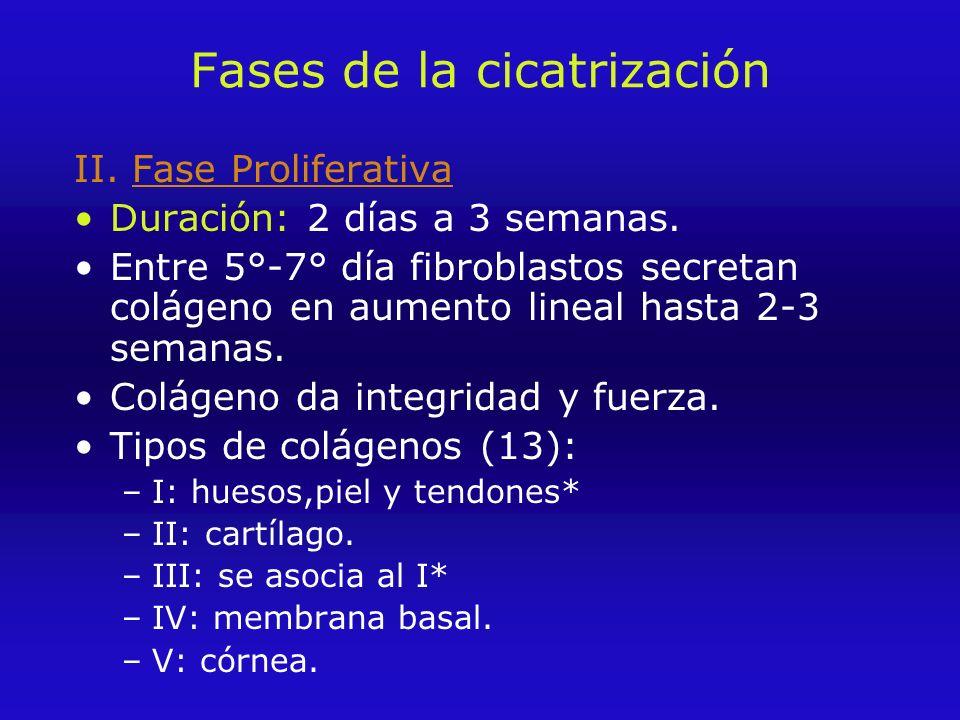 Fases de la cicatrización II.Fase Proliferativa Duración: 2 días a 3 semanas.