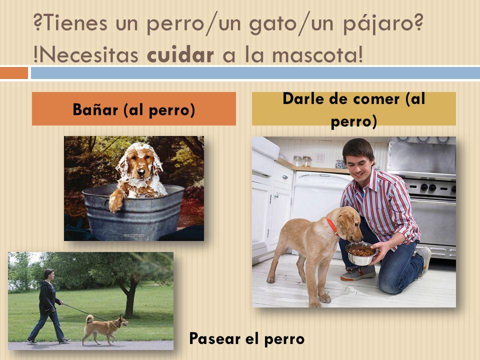 ?Tienes un perro/un gato/un pájaro? !Necesitas cuidar a la mascota! Bañar (al perro) Darle de comer (al perro) Pasear el perro