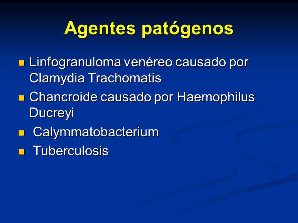 Agentes patógenos Linfogranuloma venéreo causado por Clamydia Trachomatis Linfogranuloma venéreo causado por Clamydia Trachomatis Chancroide causado por Haemophilus Ducreyi Chancroide causado por Haemophilus Ducreyi Calymmatobacterium Calymmatobacterium Tuberculosis Tuberculosis