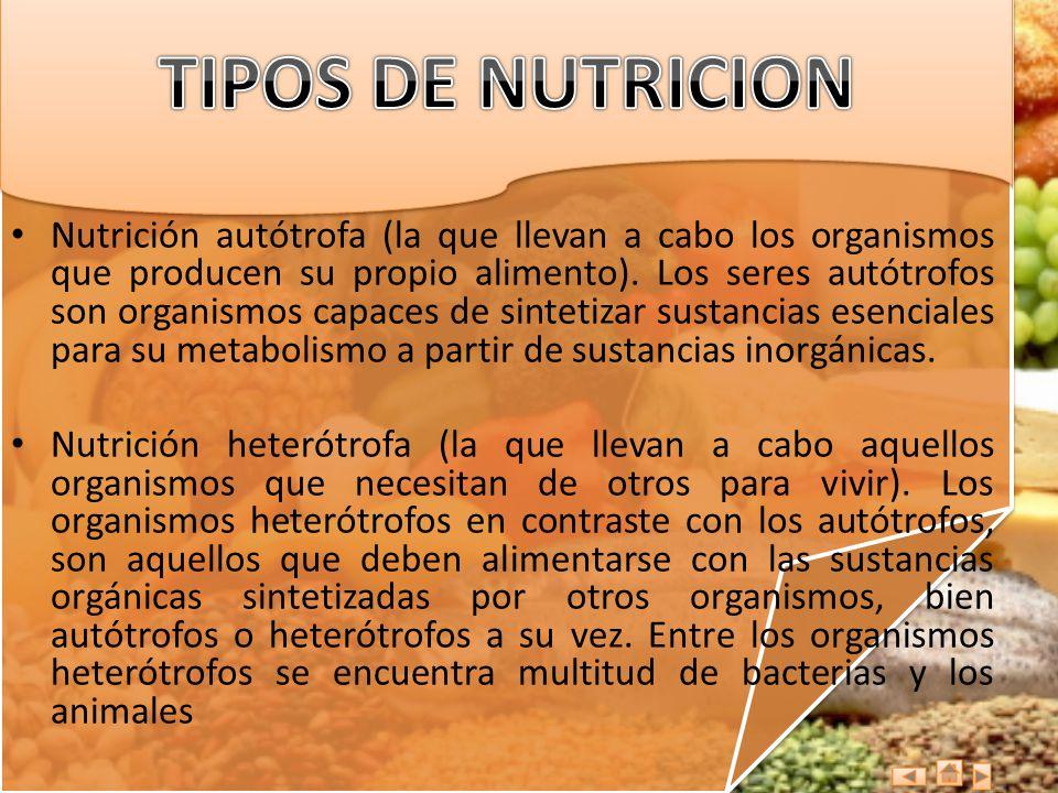 Nutrición autótrofa (la que llevan a cabo los organismos que producen su propio alimento). Los seres autótrofos son organismos capaces de sintetizar s
