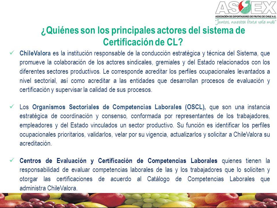 ¿Quiénes son los principales actores del sistema de Certificación de CL.