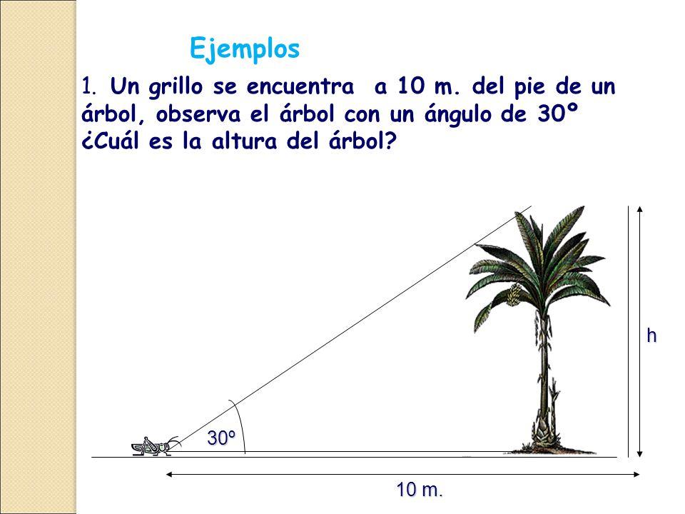 1.Un grillo se encuentra a 10 m.