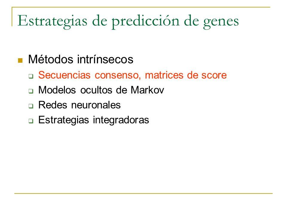 Estrategias de predicción de genes Métodos intrínsecos Secuencias consenso, matrices de score Modelos ocultos de Markov Redes neuronales Estrategias i