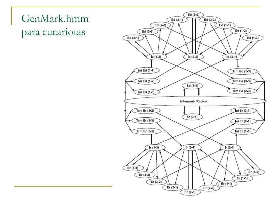 GenMark.hmm para eucariotas