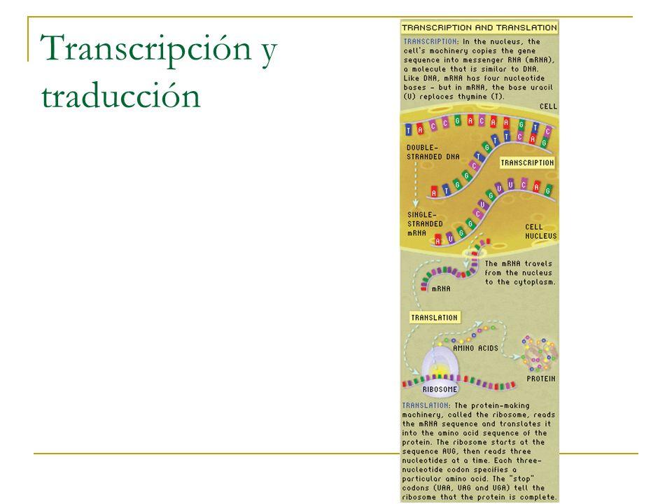 HMM para predicción de genes Modelo simple de un HMM que tiene en cuenta intrones, exones y alguna señales: B = gene start S = translation start D = donor A = accceptor T = translation stop E = gene end