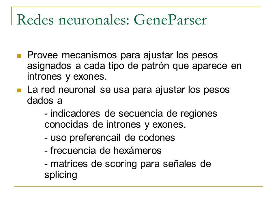 Redes neuronales: GeneParser Provee mecanismos para ajustar los pesos asignados a cada tipo de patrón que aparece en intrones y exones. La red neurona