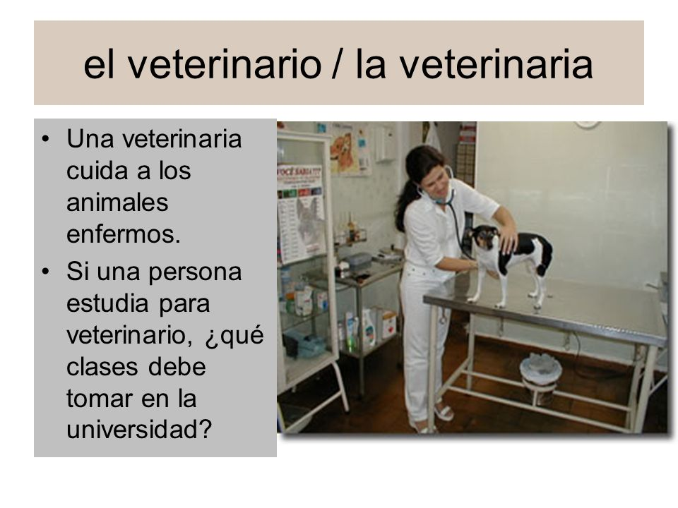 el veterinario / la veterinaria Una veterinaria cuida a los animales enfermos. Si una persona estudia para veterinario, ¿qué clases debe tomar en la u