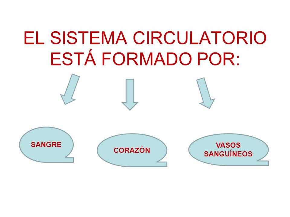 EL SISTEMA CIRCULATORIO ESTÁ FORMADO POR: SANGRE CORAZÓN VASOS SANGUÍNEOS