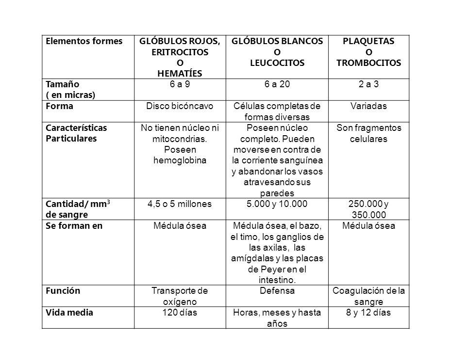 Elementos formes GLÓBULOS ROJOS, ERITROCITOS O HEMATÍES GLÓBULOS BLANCOS O LEUCOCITOS PLAQUETAS O TROMBOCITOS Tamaño ( en micras) 6 a 96 a 202 a 3 For