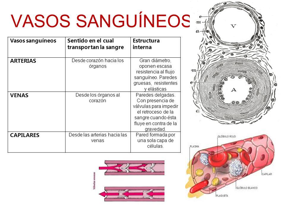 VASOS SANGUÍNEOS Vasos sanguíneosSentido en el cual transportan la sangre Estructura interna ARTERIAS Desde corazón hacia los órganos Gran diámetro, o