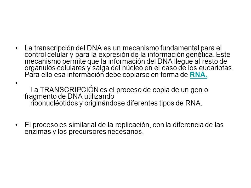 La transcripción del DNA es un mecanismo fundamental para el control celular y para la expresión de la información genética. Este mecanismo permite qu
