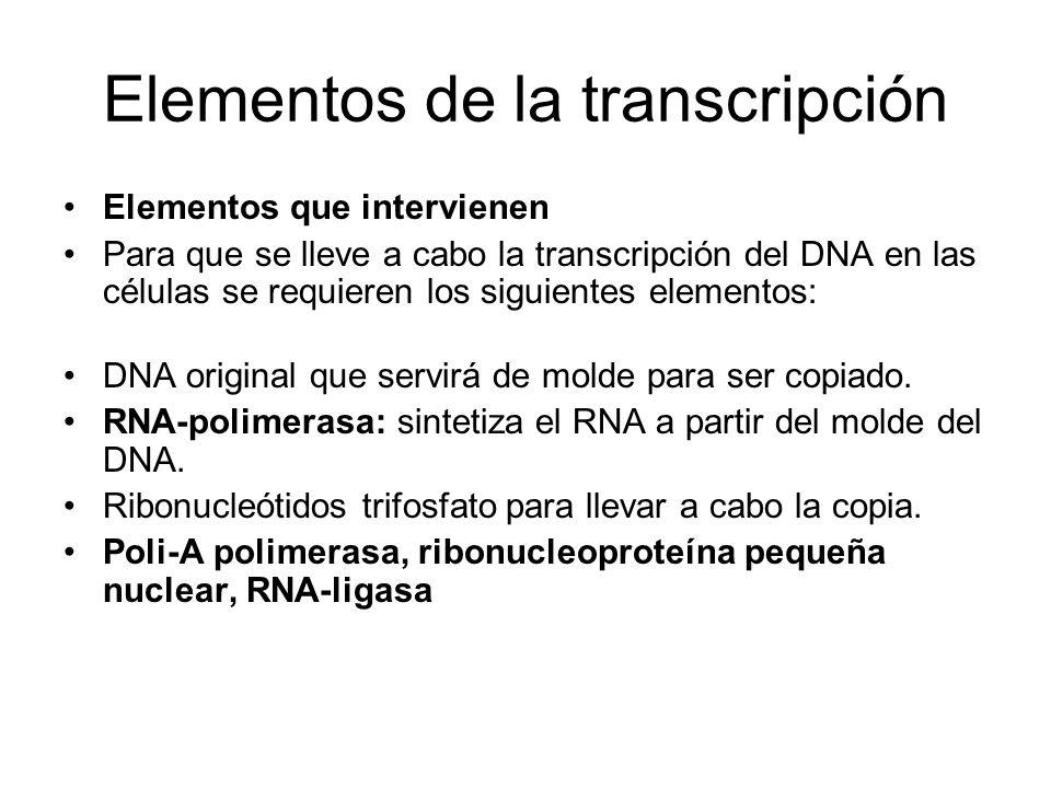 Elementos de la transcripción Elementos que intervienen Para que se lleve a cabo la transcripción del DNA en las células se requieren los siguientes e