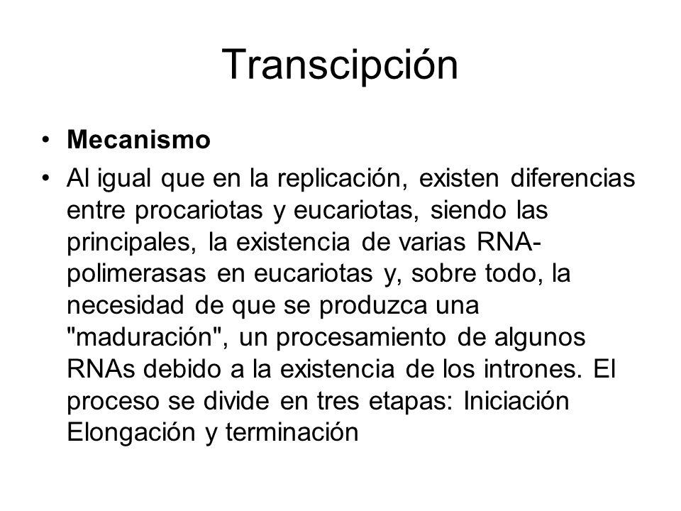 Transcipción Mecanismo Al igual que en la replicación, existen diferencias entre procariotas y eucariotas, siendo las principales, la existencia de va
