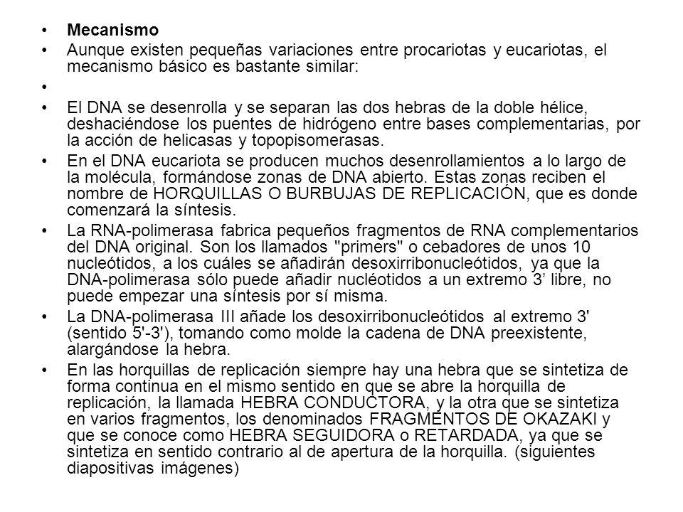 Mecanismo Aunque existen pequeñas variaciones entre procariotas y eucariotas, el mecanismo básico es bastante similar: El DNA se desenrolla y se separ
