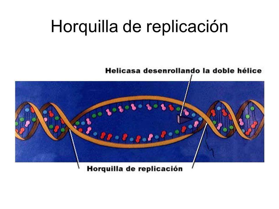 Horquilla de replicación