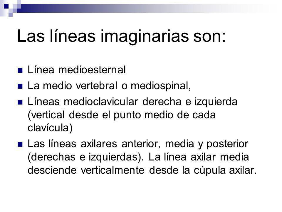 Las líneas imaginarias son: Línea medioesternal La medio vertebral o mediospinal, Líneas medioclavicular derecha e izquierda (vertical desde el punto